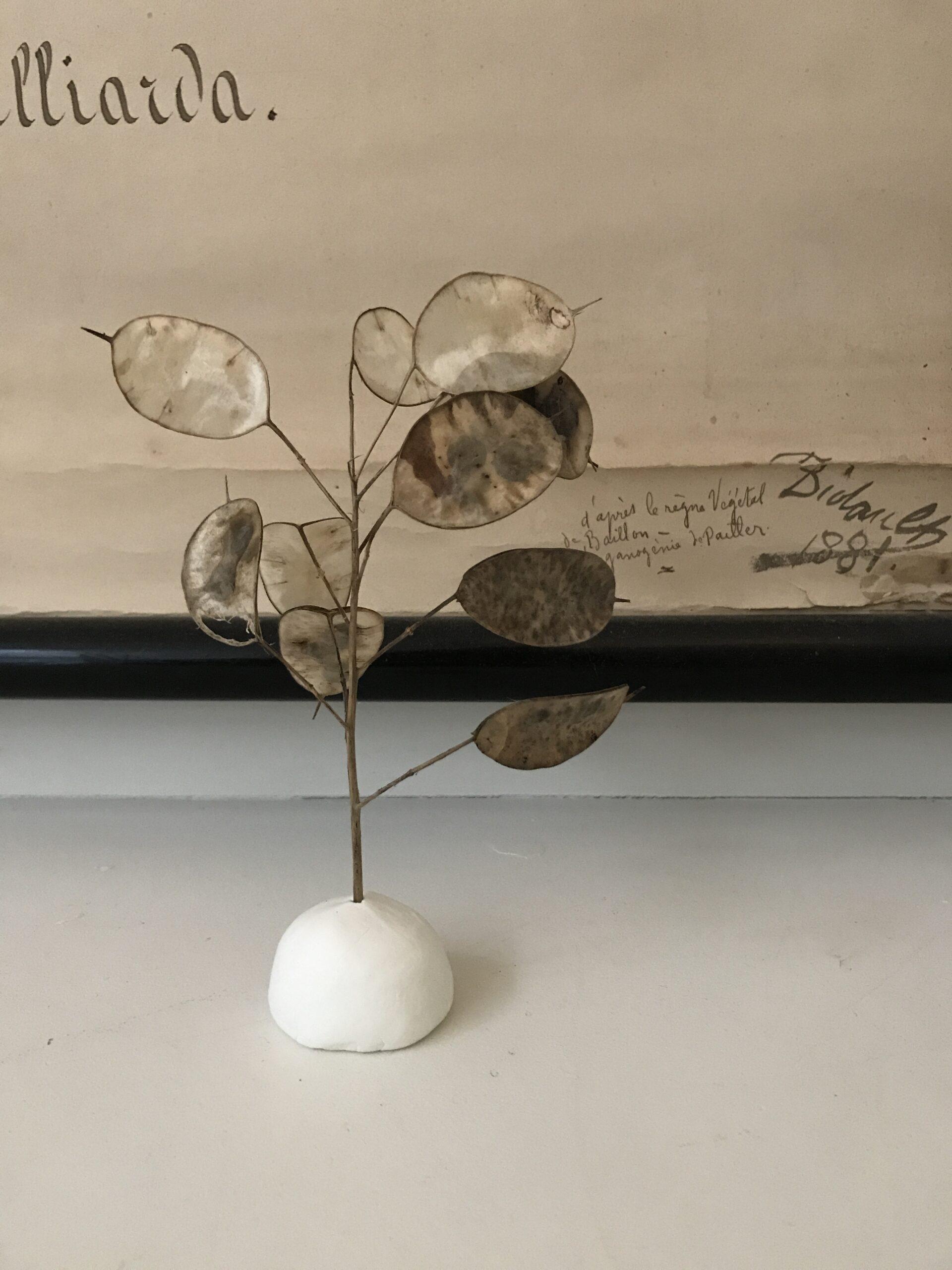 Droogbloemen in een kleivoetje