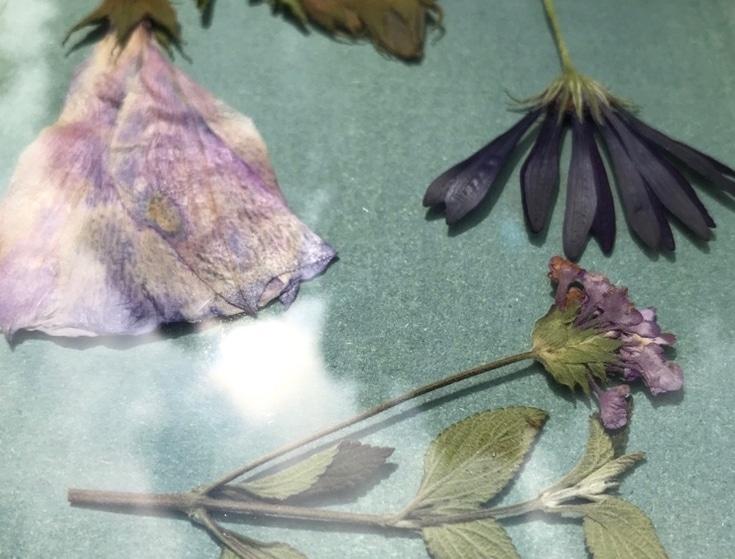 Zonneprint compositie botanisch bloemen cyanotype