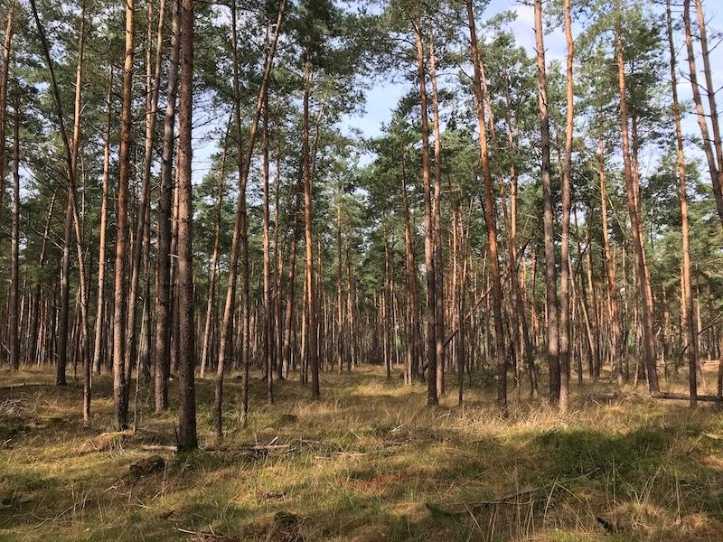 Nationaal Park De Hoge Veluwe 800x600